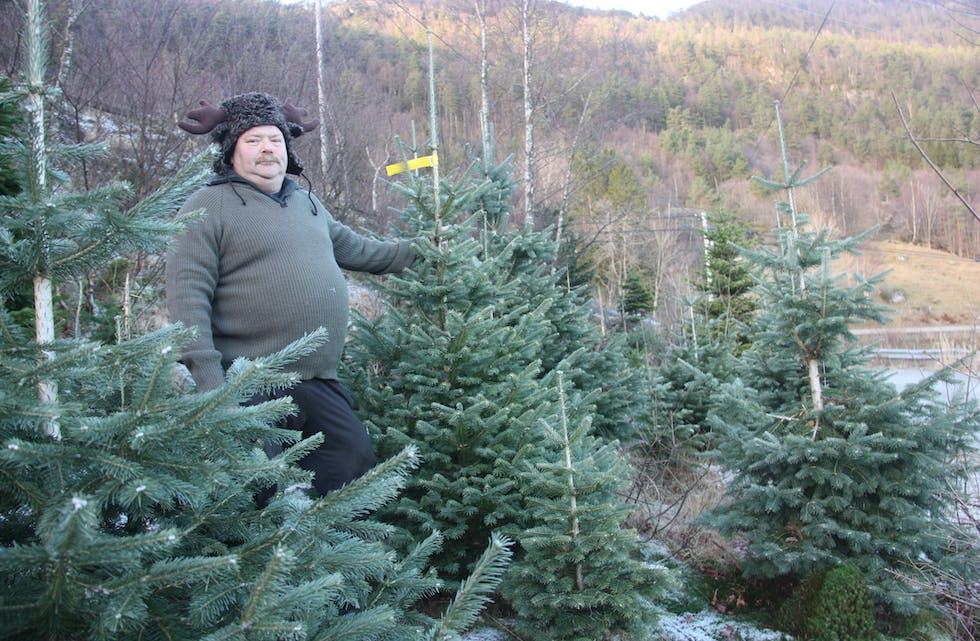 Leif Bjarne Olsen frå Ølmedal sel årleg rundt 1.500 juletre på marknad i Haugesund. Foto: Irene Mæland Haraldsen
