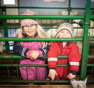 Storesøster Anna (6 år, t.v.) og Petra Frette Nordgård (2) synest det er kjekt å kosa med dei små kjea, som har meldt sin ankomst på garden dei siste vekene.