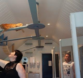 I klatrestativet  kan kattane leike, slappe av og kose seg. Ida Grønli, som driv kattepensjonatet, fortel at responsen har vore god både i sommar og i fjor sommar. Foto: Anita Haugland