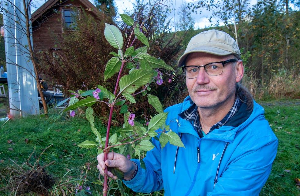 Erik Kvalheim åtvarar mot denne planta.  Foto: Torstein Tysvær Nymoen