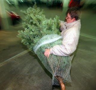 Fleire bør byrje å dyrke juletre om vi skal ha nok norske tre nokre år fram i tid. Foto: Helge Hansen / NTB /NPK